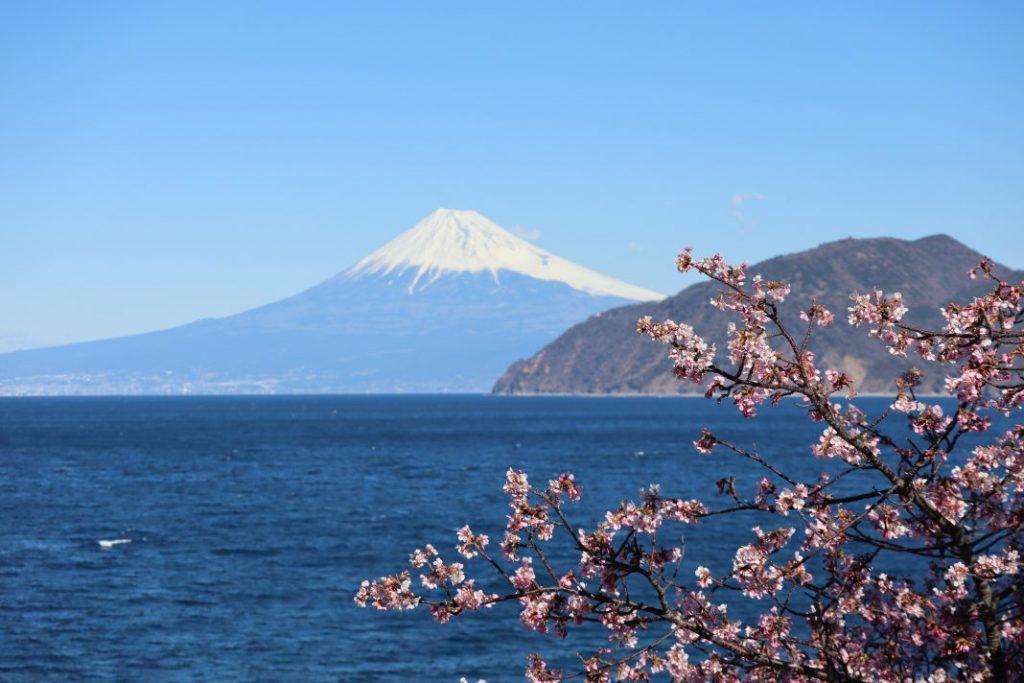 雲見海岸富士山と桜