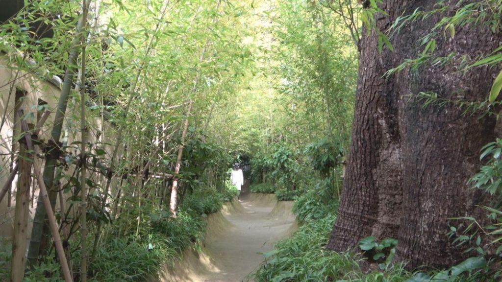 大楠と本殿を結ぶ緑輝く竹林のトンネル「楠への小路」