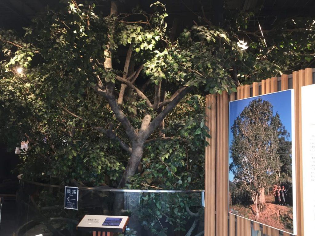 「茶樹王」と呼ばれる世界一大きいお茶の木のレプリカ