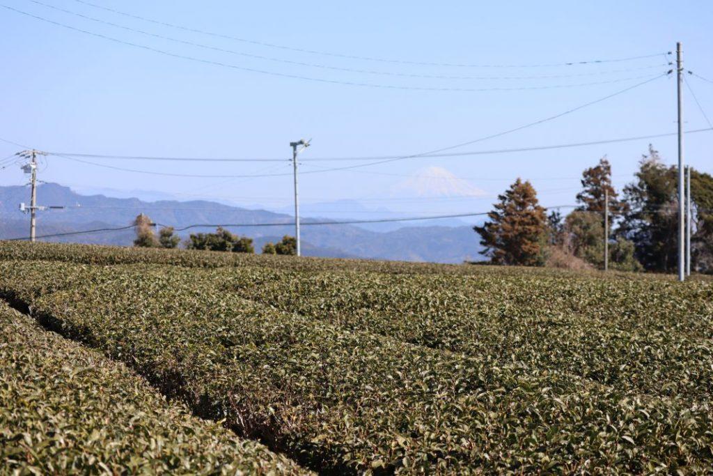 駐車場の側道から望む茶畑と富士山