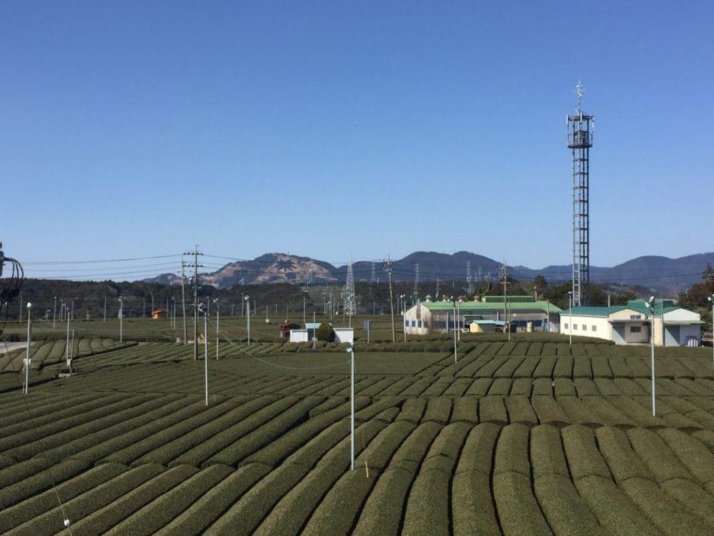 2階のテラスからの美しい茶畑風景