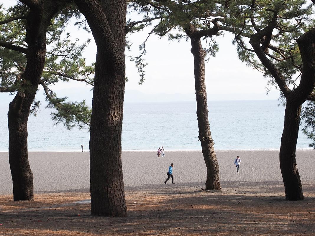 三保の松原_松の間から見える浜辺