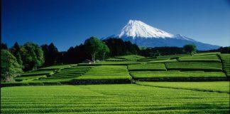 大淵笹場からの富士山