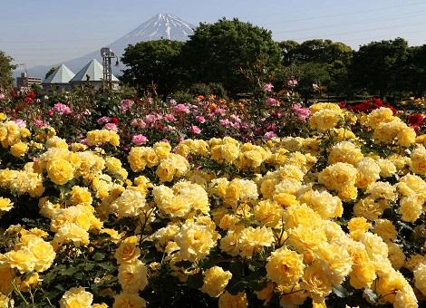 中央公園(富士市)