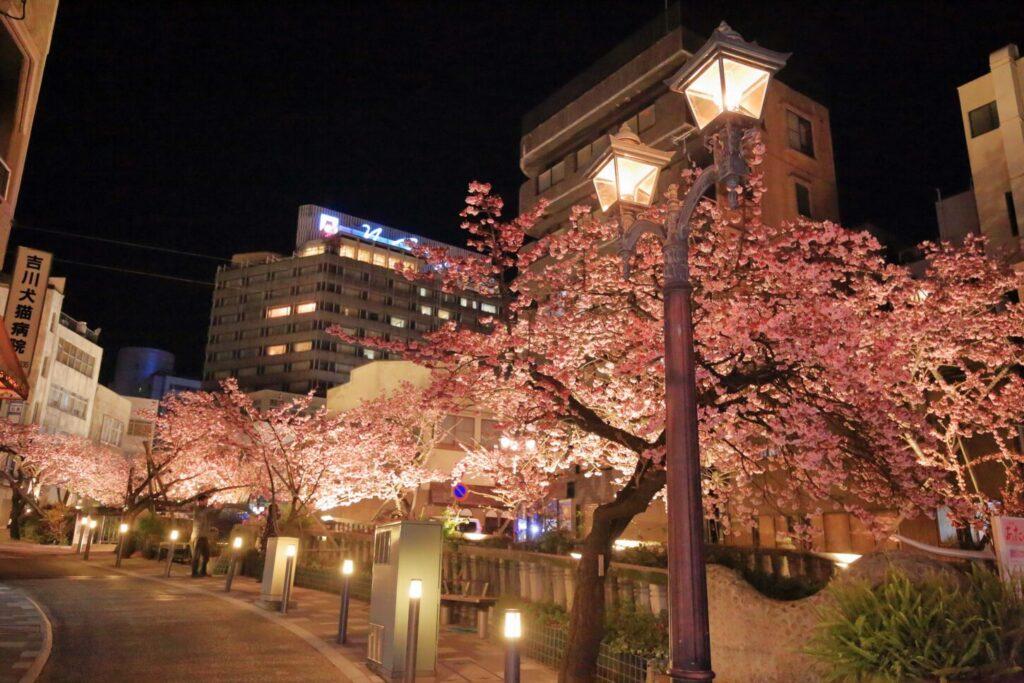 熱海市_桜3