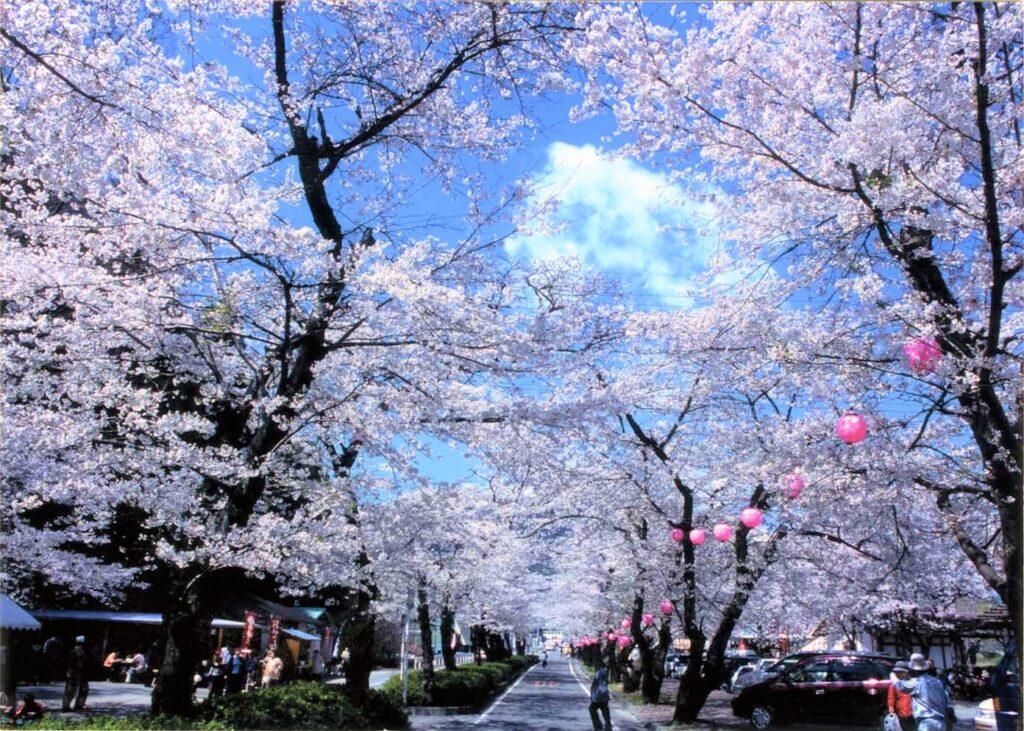 家山桜トンネル1