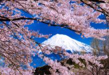 岩本山公園_桜