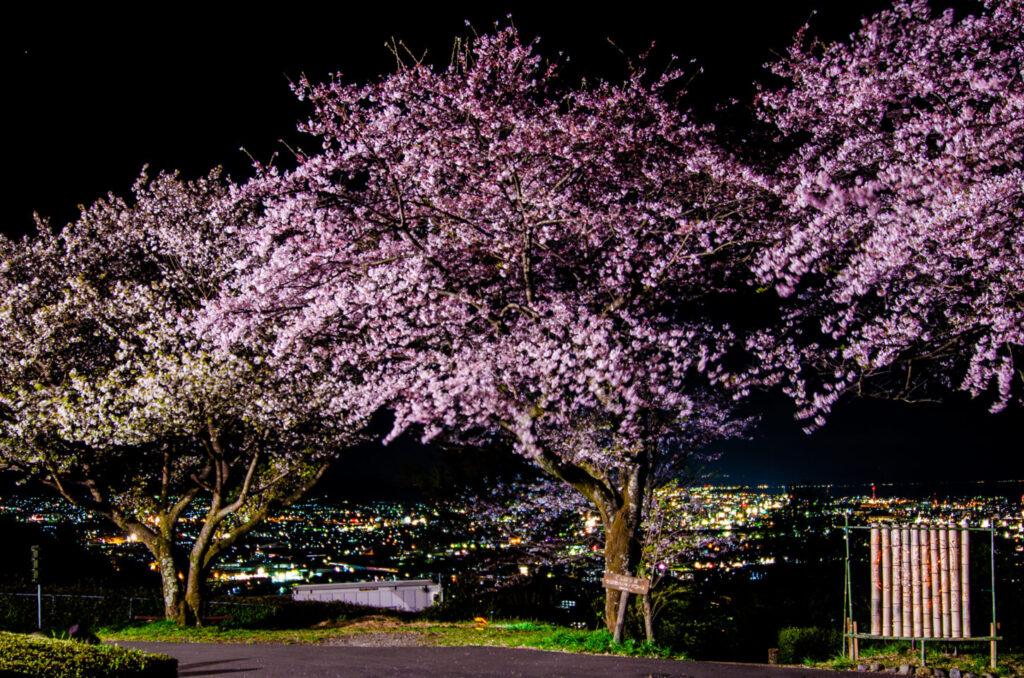 岩本山公園_夜景_桜