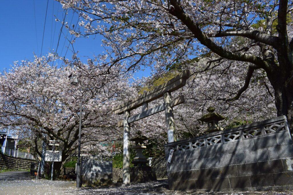 御殿山_桜
